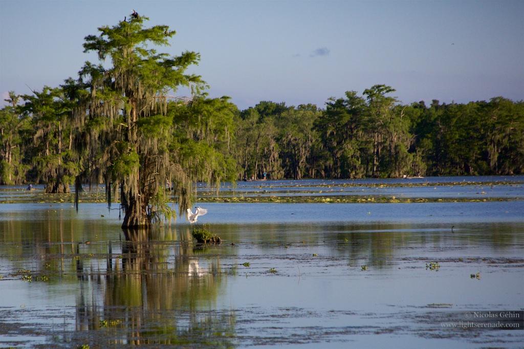 Louisiane_076