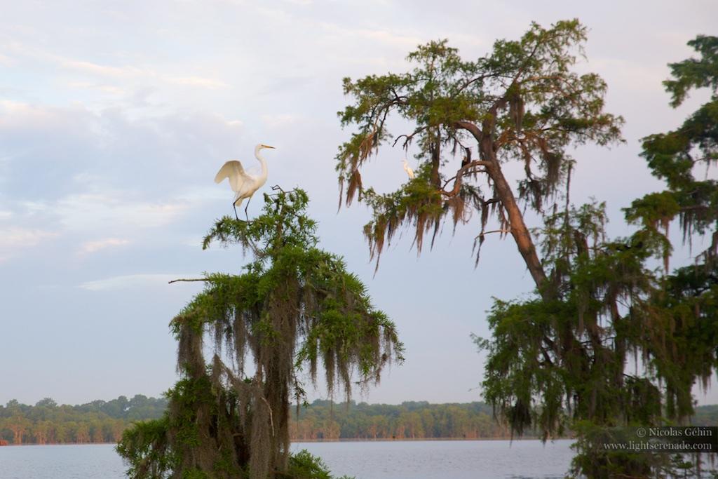 Louisiane_079