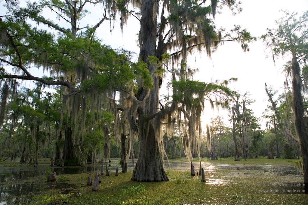 Louisiane_086