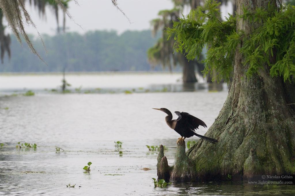 Louisiane_116